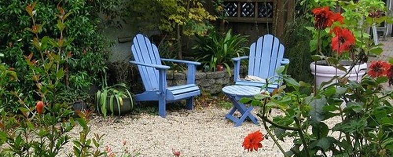'Coffee' in Mark Delepine's garden