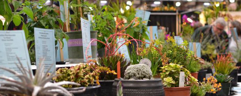 Hot Plant Picks at the SF Flower & Garden Show
