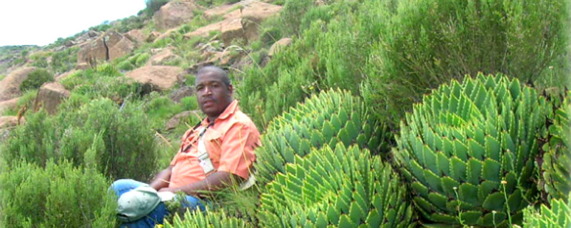 The Plants of Lesotho