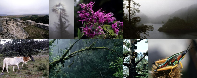 The Mexican Cloud Forests of Oxaca & Chiapas