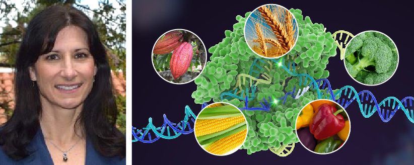 CRISPR Technology: Genome Editing for Agriculture