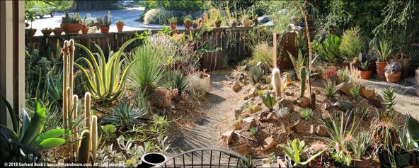 Return to Davis for Coffee in the Garden of GerhardBock
