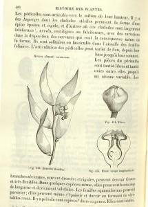 Histoire-des-plantes