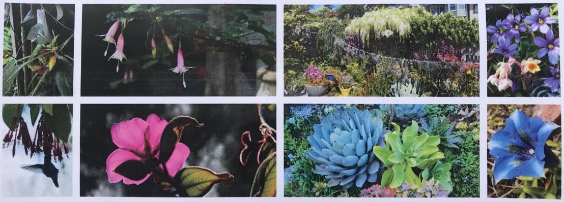 Coffee in the Garden – A Trio of Member Gardens in SanFrancisco