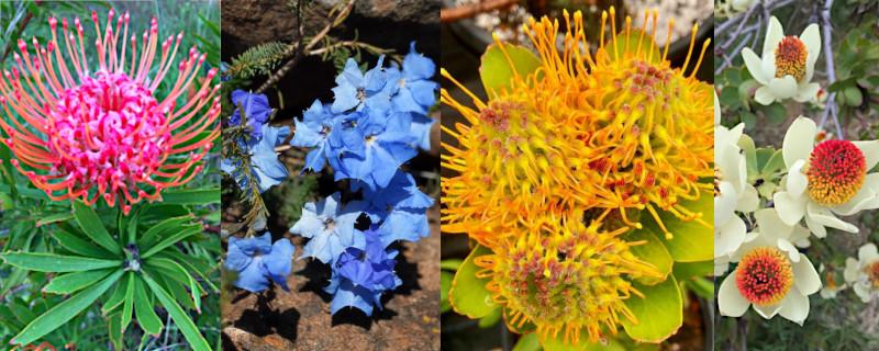 The Untapped Treasure Trove of UC Santa Cruz Arboretum and BotanicGarden