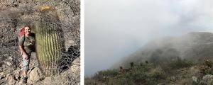 Photo of Sula Vanderbuilt in the Baja desert and a photo of fog blanketing a Baja hillside.